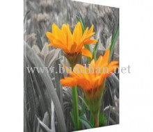 Daisies Wrapped Canvas